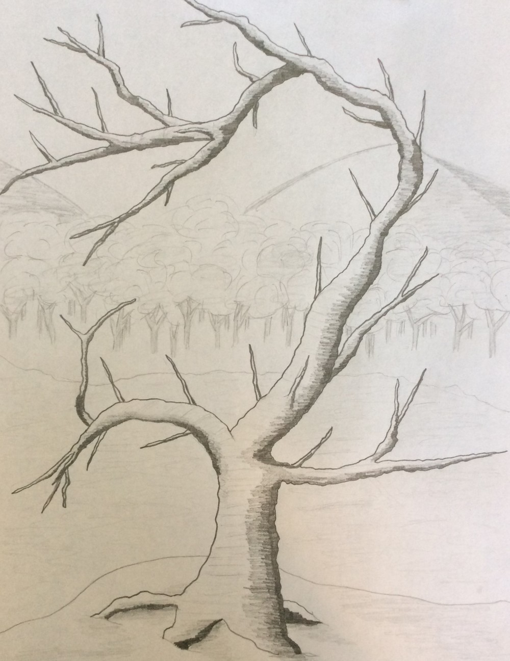 Drawing No. 19 A Lonely Tree
